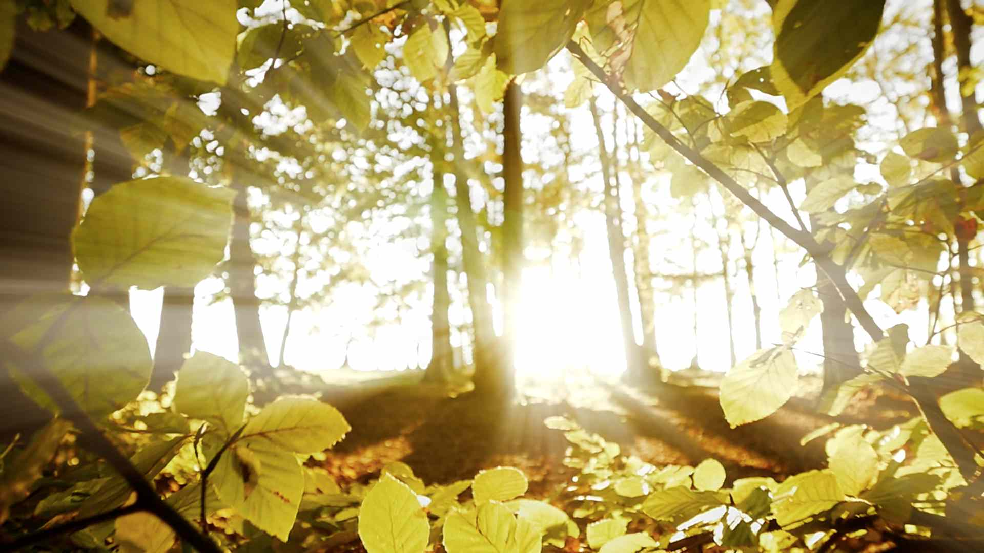 sun-light-shining-through-tree